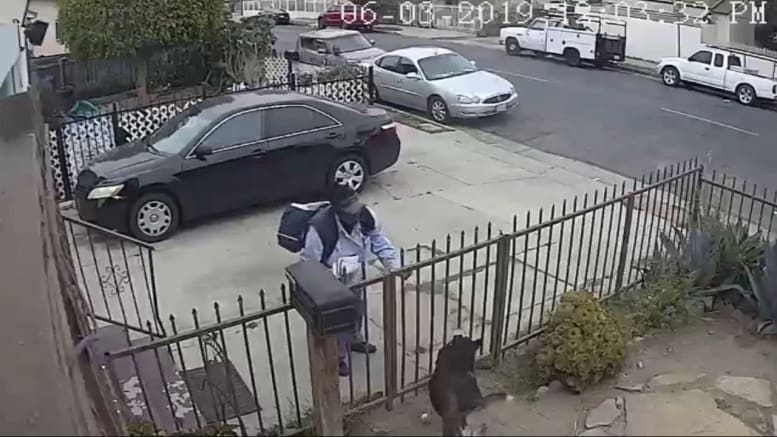 USPS mail carrier pepper-sprays friendly dog in Watts, Los Angeles